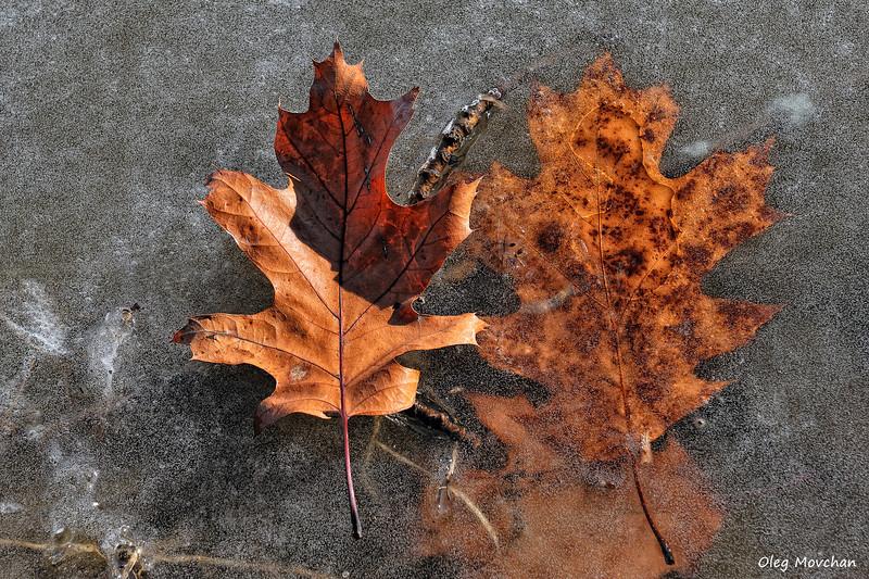 fall foliage-54