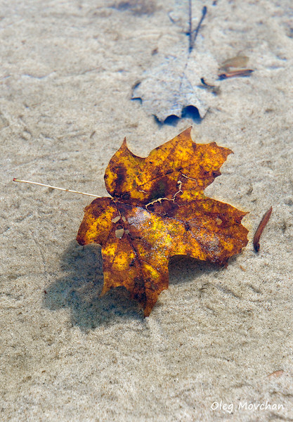 fall foliage-23
