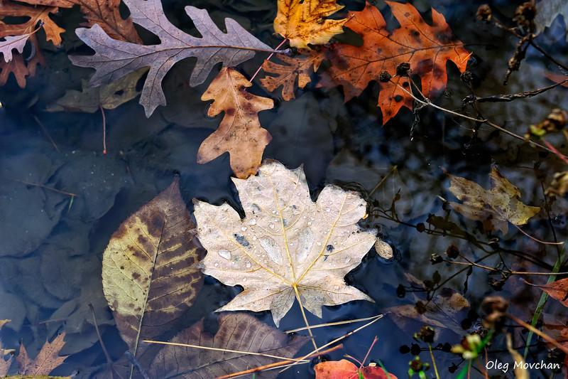 fall foliage-11