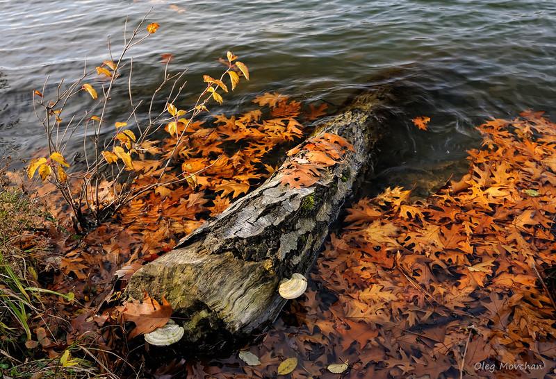 fall foliage-37