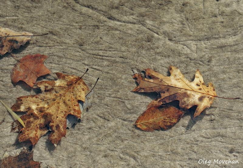 fall foliage-21