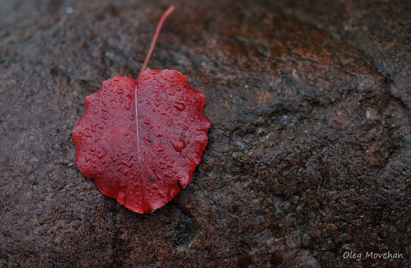 fall foliage-6