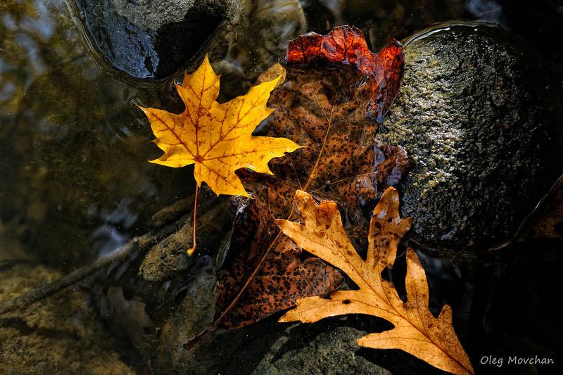 fall foliage-32