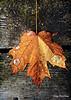 fall foliage-16