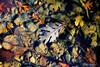 fall foliage-34