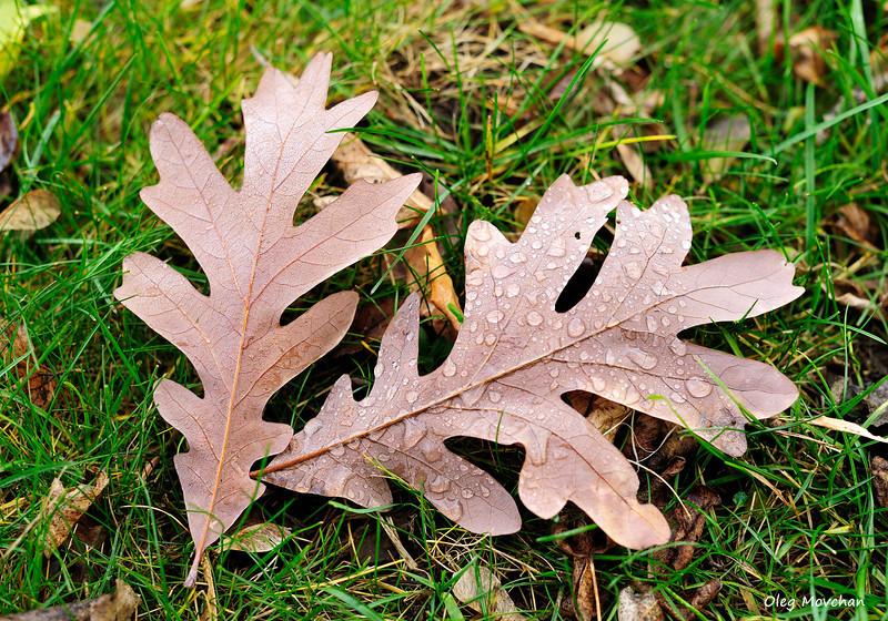 fall foliage-29