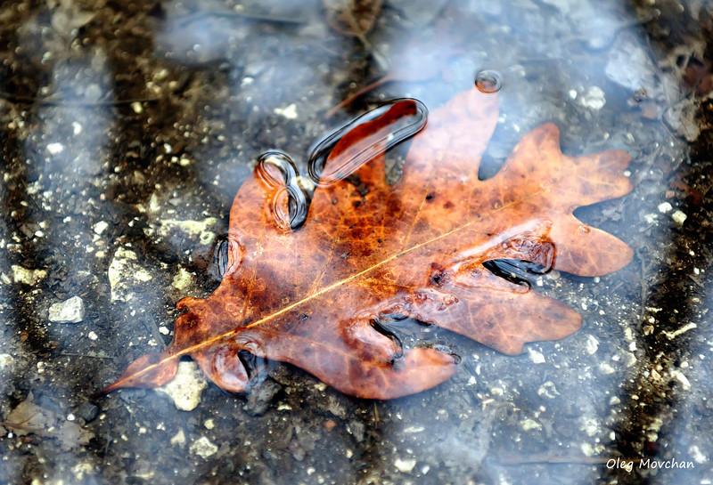 fall foliage-39