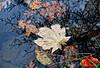 fall foliage-12