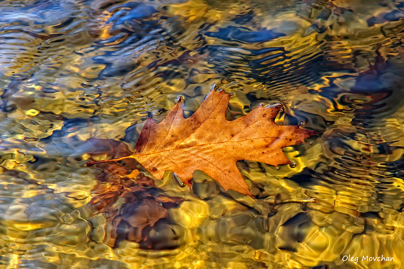 fall foliage-18