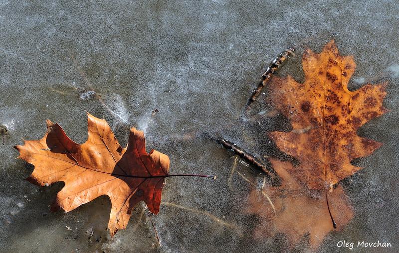 fall foliage-55
