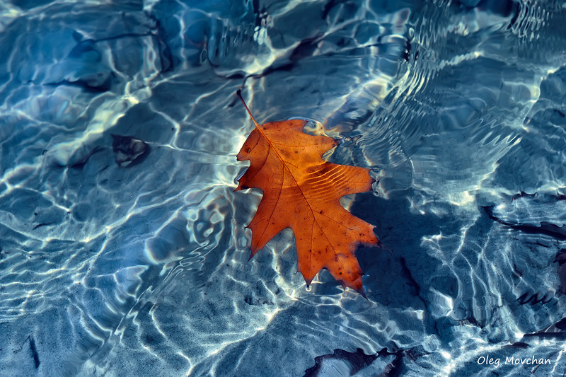 fall foliage-17