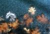 fall foliage-52
