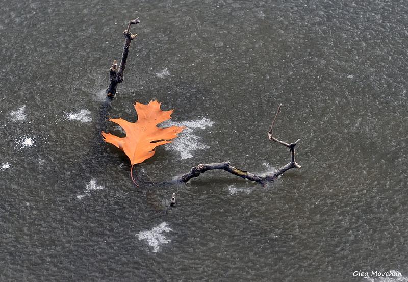 fall foliage-47