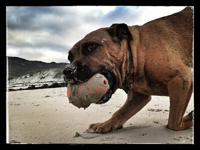 Kong on the Beach