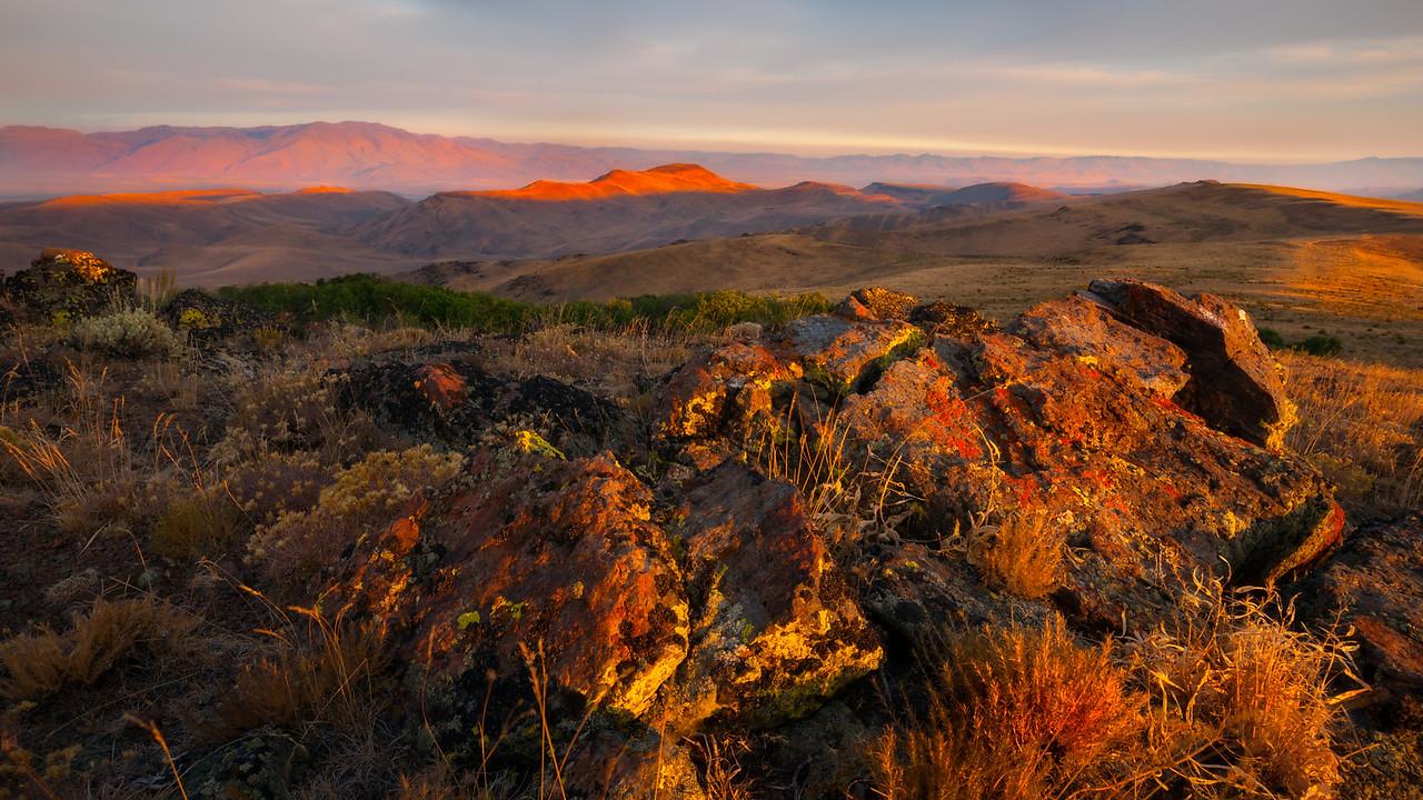 Lichens. Trout Creek Mountains