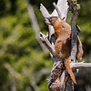 Marmot in Grand Teton National Park
