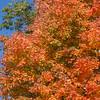 kenhodina_Wk42_HDR_Fall-color