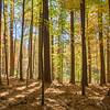 kenhodina_Wk42_HDR_Forest Floor1