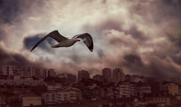 Flying over Porto