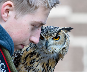 Boy and owl
