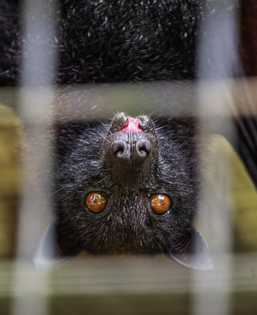 Bat glance