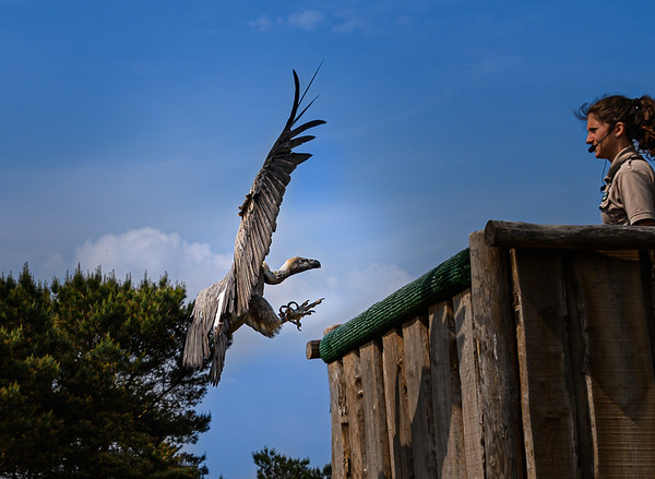 Vulture approach
