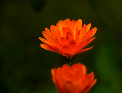 Flower in late autumn