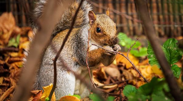Squirrel peekaboo