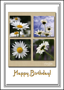 Happy Birthday - Daisy