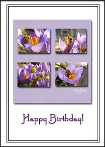 Happy Birthday - Betsy  Bee