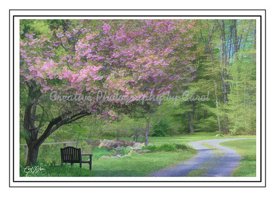Long and Winding Road - Greeting Card
