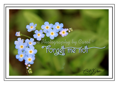 Forget me not - Greeting Card