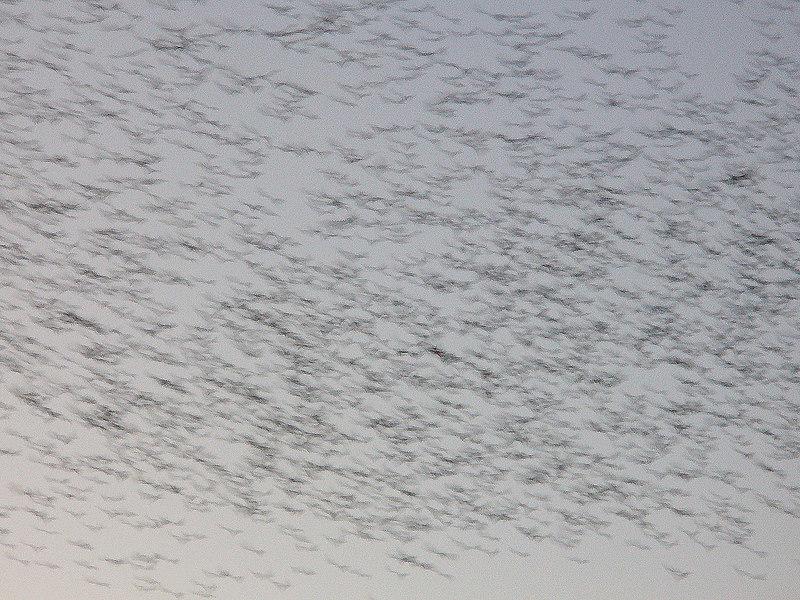 Birds, Yerba Buena, SF