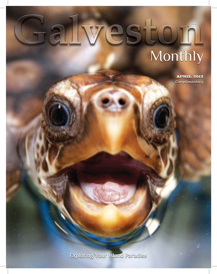 """I am thrilled to share that one of my sea turtle photos is on the cover of Galveston Monthly magazine!! There is also an article about me featuring several of my photos. All of the images in the article are available for purchase from this website. Galveston Monthly is a great local magazine; check it out at <a href=""""http://galvestonmonthly.com"""">http://galvestonmonthly.com</a>!"""