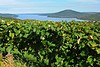 Canandaigua lake and barn and grape fields 2 DSC_3326