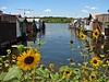 Canandaigua boat houses and sunflowers 2007 MG_2537