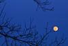 Letchworth moon rise