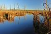 Conesus inlet swamp 4 DSC_5056