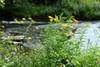 Chittenango Falls 081113 21 dreamy DSC_0068
