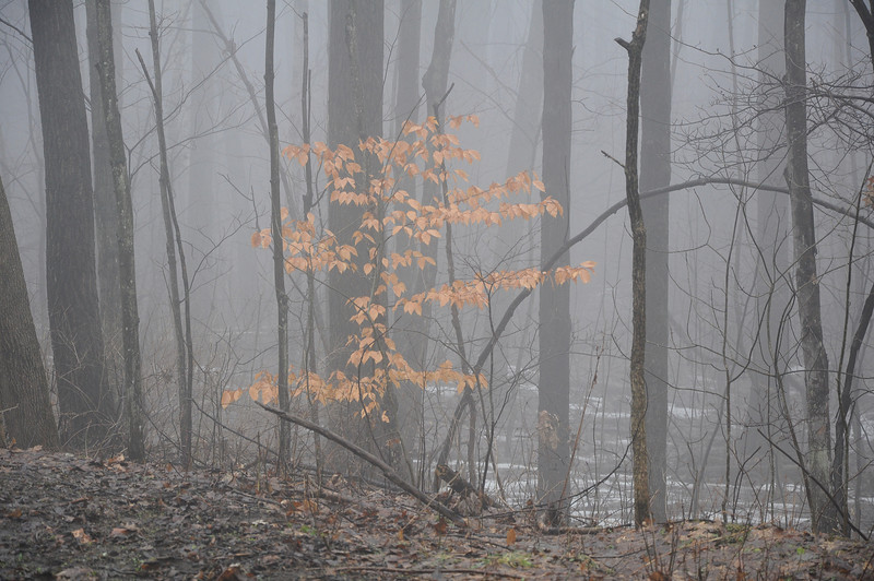 Foggy woods in Letchworth Park.