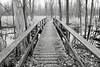 Thousand acre swamp 122814 7 DSC_1756