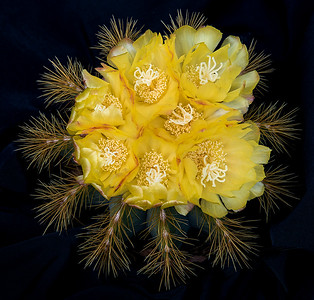 Then days later this beautiful bouquet formed. Who knew cactus were so beautiful?