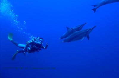 diver and dolphins (ダイバ-とイルカ達)