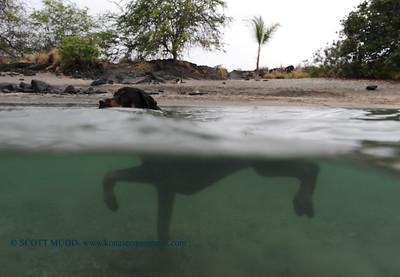 water dog (水の犬)