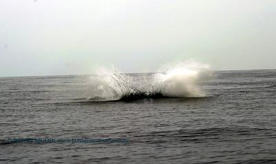 whale splash (クジラのスプラッシュ)