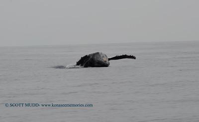 whale breach (クジラのブリーチ)