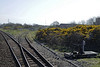 Derwent Junction, Workington, Sat 12 April 2014 - 1535.   The coast line from Maryport to Whitehaven was opened by the Whitehaven Junction Rly in 1847.  A branch from Derwent Junction to Cockermouth was opened at the same time by the Cockermouth & Workington Rly.  In 1864 the Cockermouth line was extended through the heart of the Lake District to Penrith by the Cockermouth, Keswick & Penrith Rly.  At Penrith the CKPR linked with the London & North Western Rly's west coast main line, and the North Eastern Rly's trans-Pennine line over Stainmore to County Durham.  The LNWR absorbed the Whitehaven Junction and the Cockermouth & Workington Rlys in 1865.  Derwent Junction was very busy in Workington's industrial hey-day, but gorse now blossoms where rails used to run.  The single track leads into Workington docks, and still sees some use.