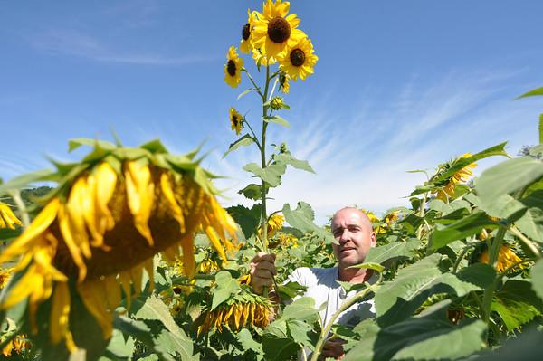 Sunflower Diesel Power
