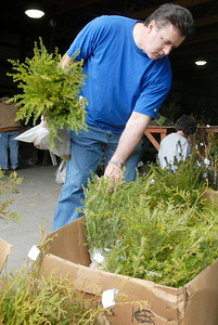 Jim Kassel, of Niskayuna, holds a bag of Canadian hemlocks as he picks through other seedlings for the annual seedling distribution at the Saratoga County Fairgrounds, which continues through today 9 a.m. - 3 p.m. (Saturday 4/30). Photo Erica Miller 4/29/11 news_Seedlings1_Sat