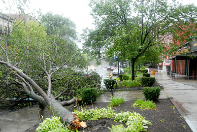 A fallen tree on Broadway directly in front of the former Border's building losing power south of Broadway during the morning hours as Tropical Storm Irene hits Saratoga Springs Sunday morning. Photo Erica Miller 8/28/11 TropicalStorm4